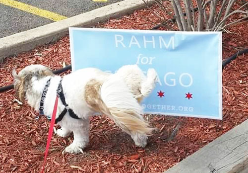 One bit of advice. Don't let your puppy hump the Rahm sign. If might give him or her scabbies and cost you a trip to the vet. Photo originally from Noah Stein.
